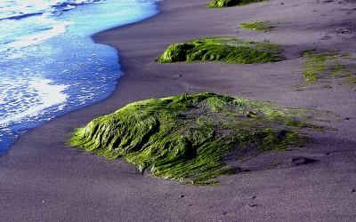 Föveny/Beach 2006