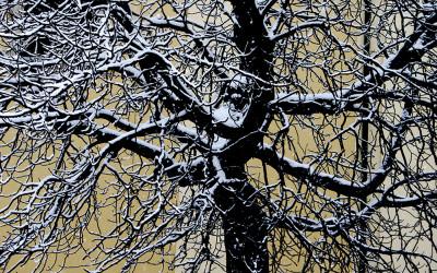 Fa/Tree 2013
