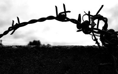 Szögesdrót/Barbed wire 2020